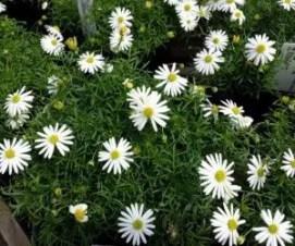 Le piante da fiore che resistono meglio al caldo - Coltivazione ...