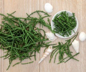 Salicornia o asparagi di mare