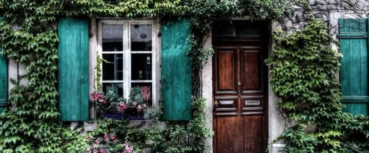 L'edera, caratteristiche della pianta e coltivazione in giardino