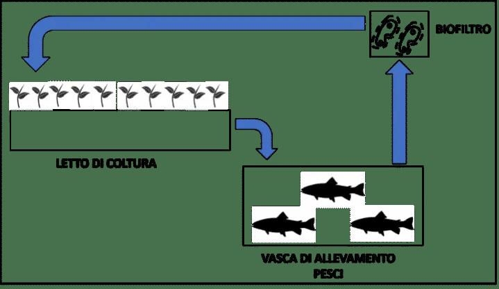 Schema del sistema di acquaponica