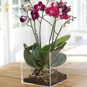 Le orchidee come coltivarle in vaso e in giardino for Vaso orchidea