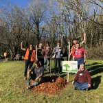 Planting Trees with Friends