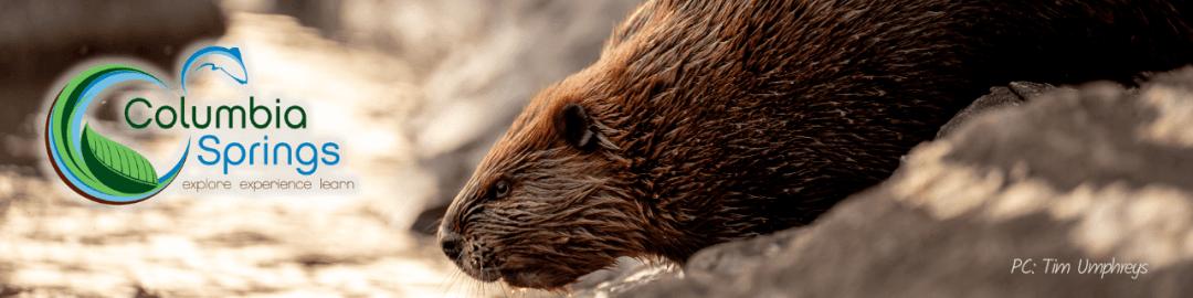 Beaver Bash Banner