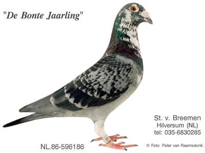 1.08-4684_bontejaarling