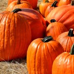 Over 120 events celebrating Fall and Halloween in Columbus