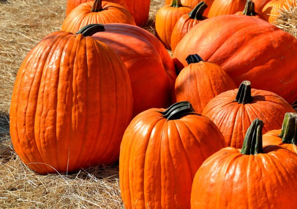 fall and halloween in columbus