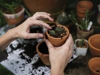 gardening succulent