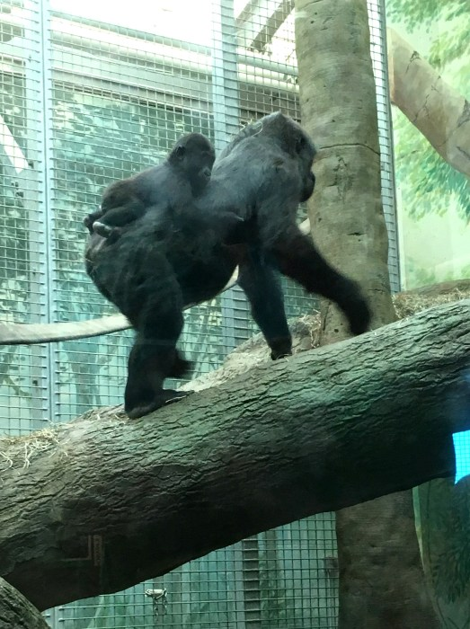mother's day at the Columbus Zoo