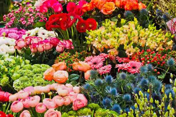 Roses In Garden: Inniswood Annual Spring Plant Sale