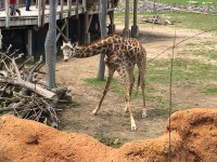 columbus zoo and aquarium cartoon weekend live streams for kids