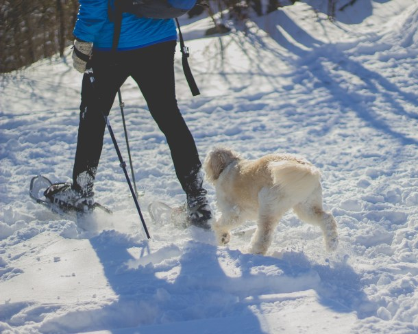 winter hike, dog hike, winter in Columbus
