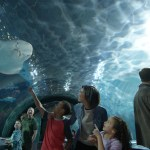 Free kid admission at Newport Aquarium with adult admission