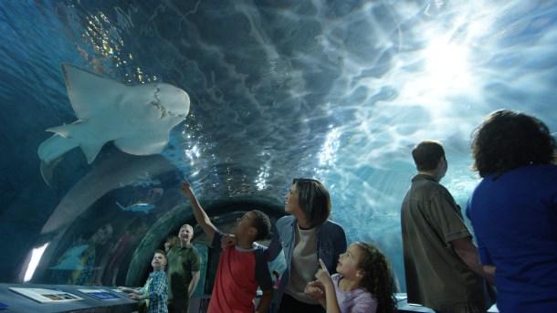 Free admission at Newport Aquarium