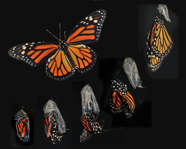 monarch weekend