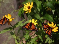 monarch weekend