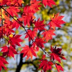 Fall Columbus Metro Park Hikes