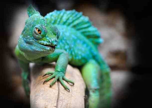 All Ohio Reptile Show