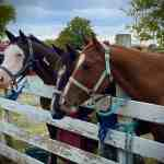 Pony, Carriage, and Train Rides & Petting Zoo with Horse -N- Round Fun LLC