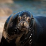 Columbus Zoo tickets and discounts, plus new exhibits and offerings