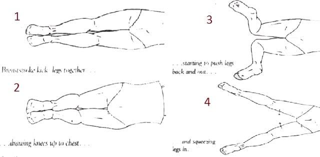 Teknik dasar renang gaya dada