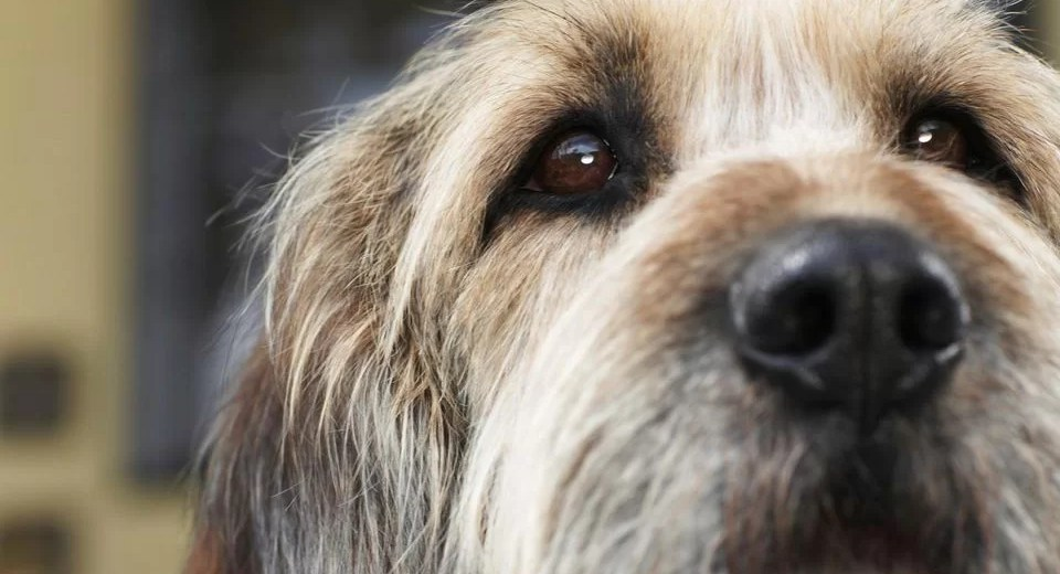 idee comuni sui cani da sfatare comecosaquando
