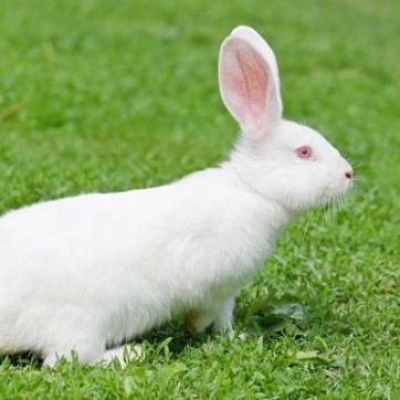cuantas-razas-de-conejos-hay-10_opt