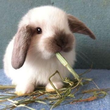 cuantas-razas-de-conejos-hay-6_opt