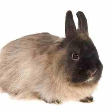 cuantas-razas-de-conejos-hay-9_opt