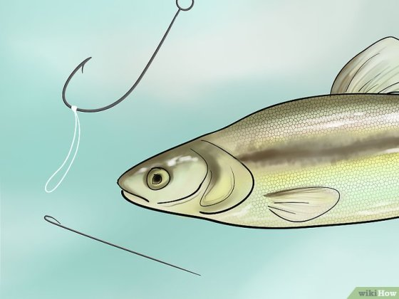 Immagine titolata Bait a Fishing Hook Step 21