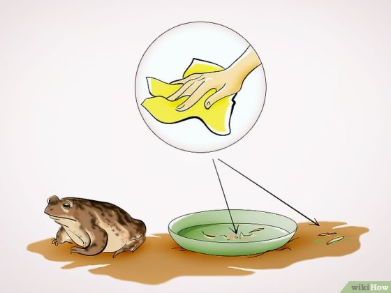 Immagine titolata Care for a Toad Step 12