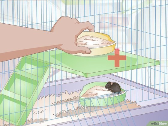 Immagine titolata Litterbox Train Your Rat Step 10