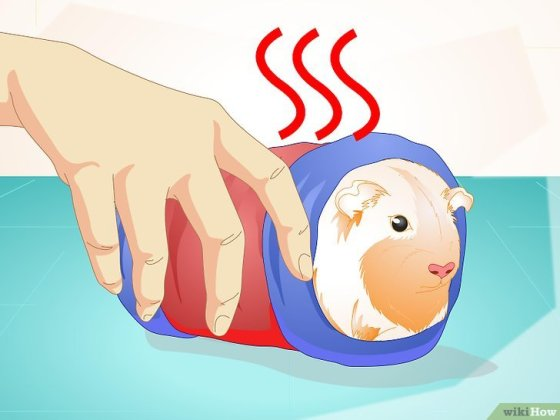 Immagine titolata Look After Your Sick Guinea Pig Step 9