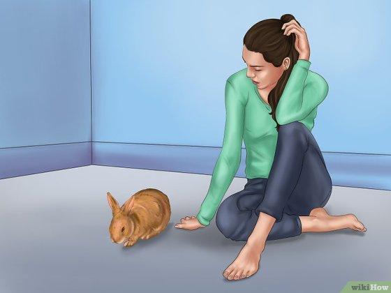 Immagine titolata Pet a Rabbit Step 3