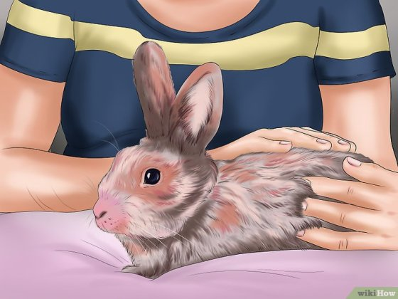 Immagine titolata Pet a Rabbit Step 6
