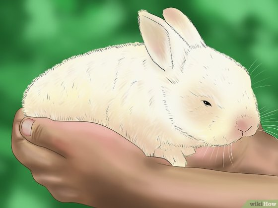 Immagine titolata Pet a Rabbit Step 8