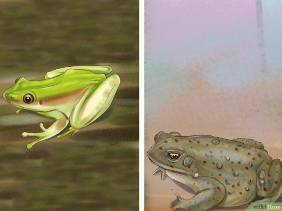 Immagine titolata Tell the Difference Between a Frog and a Toad Step 5