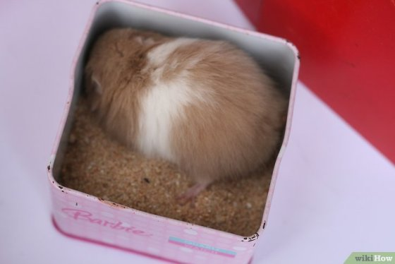 Immagine titolata Train Your Hamster Step 8