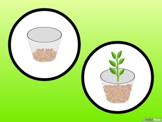Immagine titolata Grow Houseplants in Water (Hydroculture) Step 3