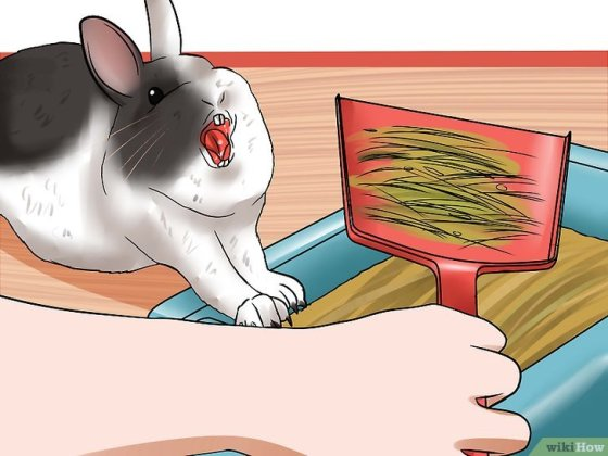 Immagine titolata Tame Your Rabbit Step 13