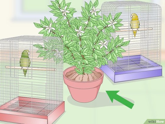Immagine titolata Set Up a Parrotlet Cage Step 11