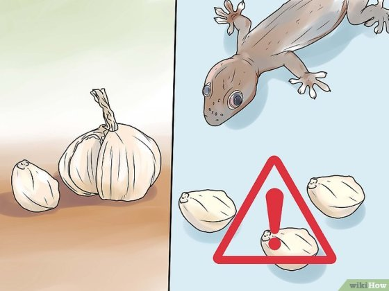 Immagine titolata Get Rid of Common House Geckos Step 5