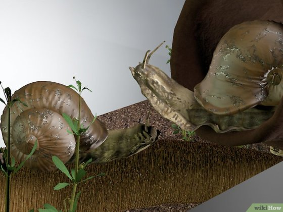 Immagine titolata Care for Snails Step 6