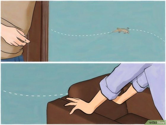 Immagine titolata Chase Lizards out of Your House Step 3