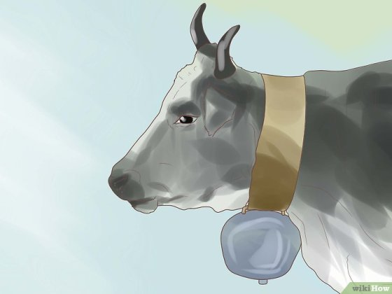 Immagine titolata Choose a Good Dairy Cow Breed Step 5