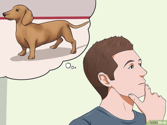 Immagine titolata Get Your Small Dog to Stop Biting and Barking at You Step 1