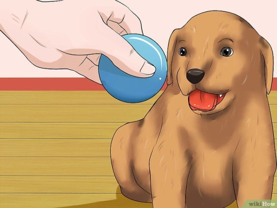 Immagine titolata Get Your Small Dog to Stop Biting and Barking at You Step 13