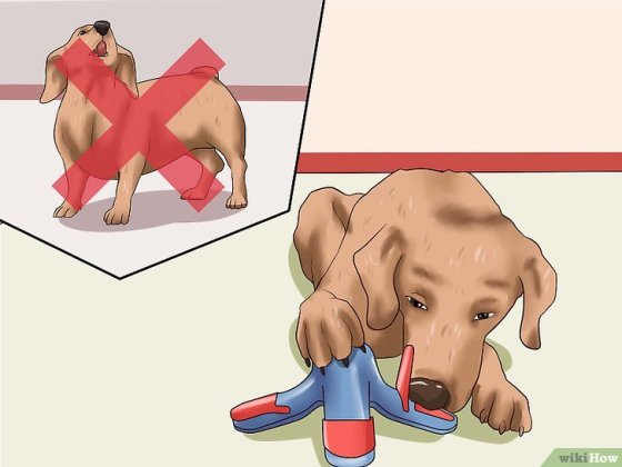 Immagine titolata Get Your Small Dog to Stop Biting and Barking at You Step 6