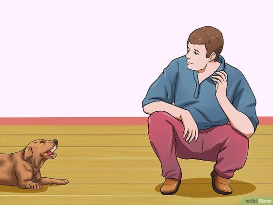 Immagine titolata Get Your Small Dog to Stop Biting and Barking at You Step 9