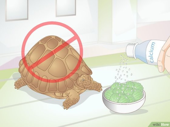Immagine titolata Take Care of a Baby Tortoise Step 12