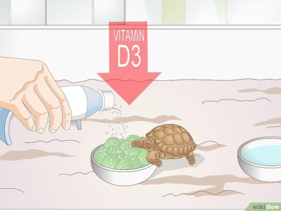 Immagine titolata Take Care of a Baby Tortoise Step 9
